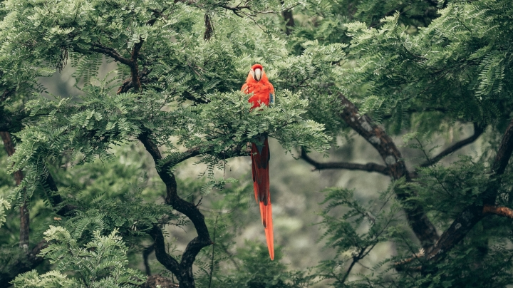The Parrot by EleanorPlatt