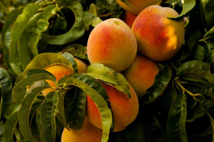 Pedalling For Peaches by Yannick Pas